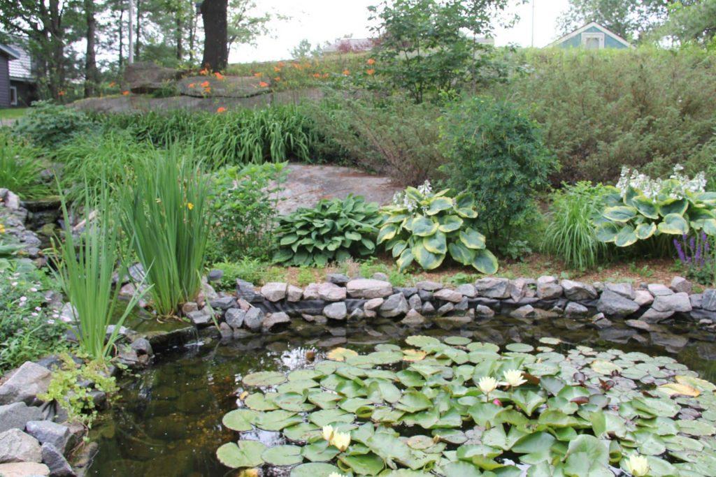 Build a Backyard Wildlife Pond