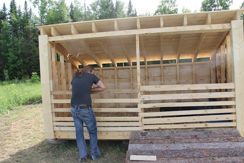 Three sided shelter barred up for weaners