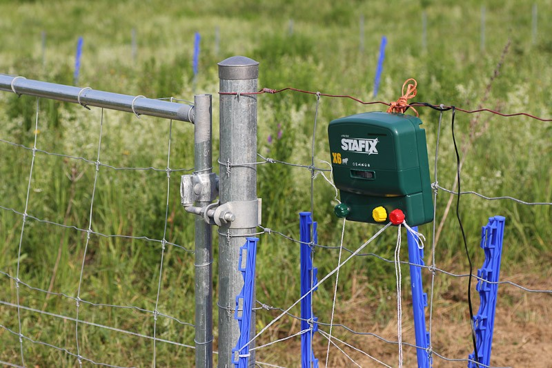 electric fencing for pigs