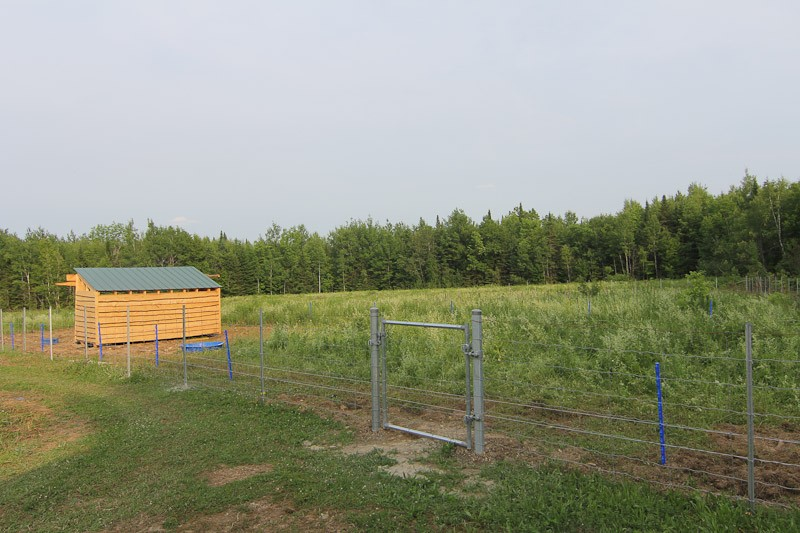 pasture fencing for pigs