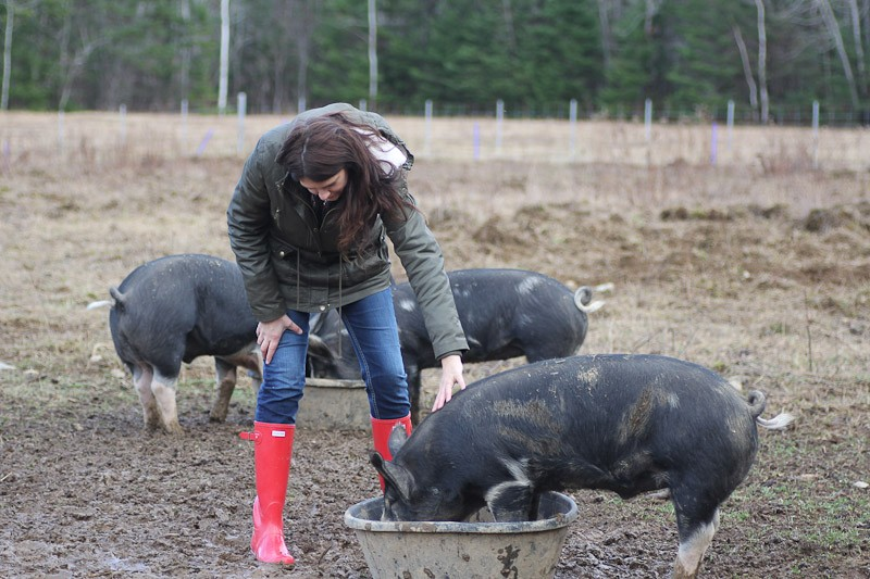 Homesteader with berkshire pigs