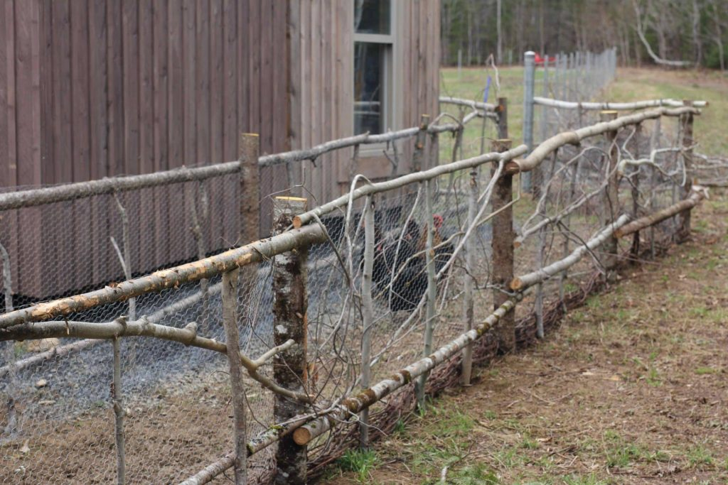 Homestead life: Chicken run made from wood found on the property