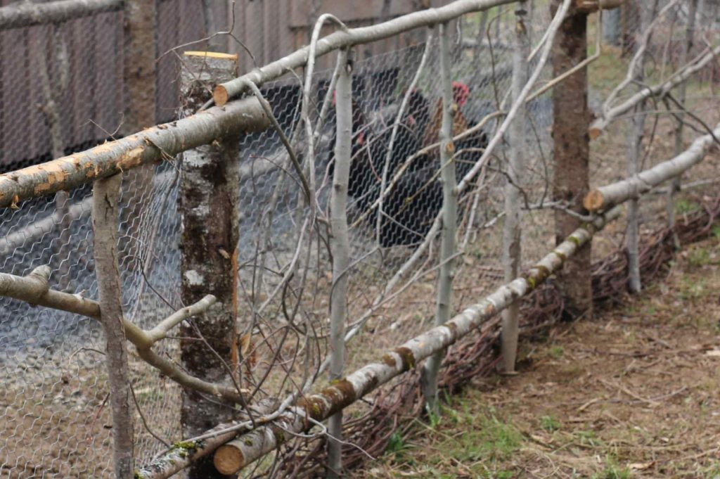 DIY Rustic Chicken Tunnel