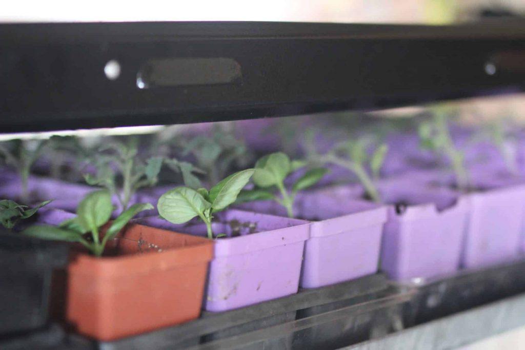 Homestead life: Seed starting indoors