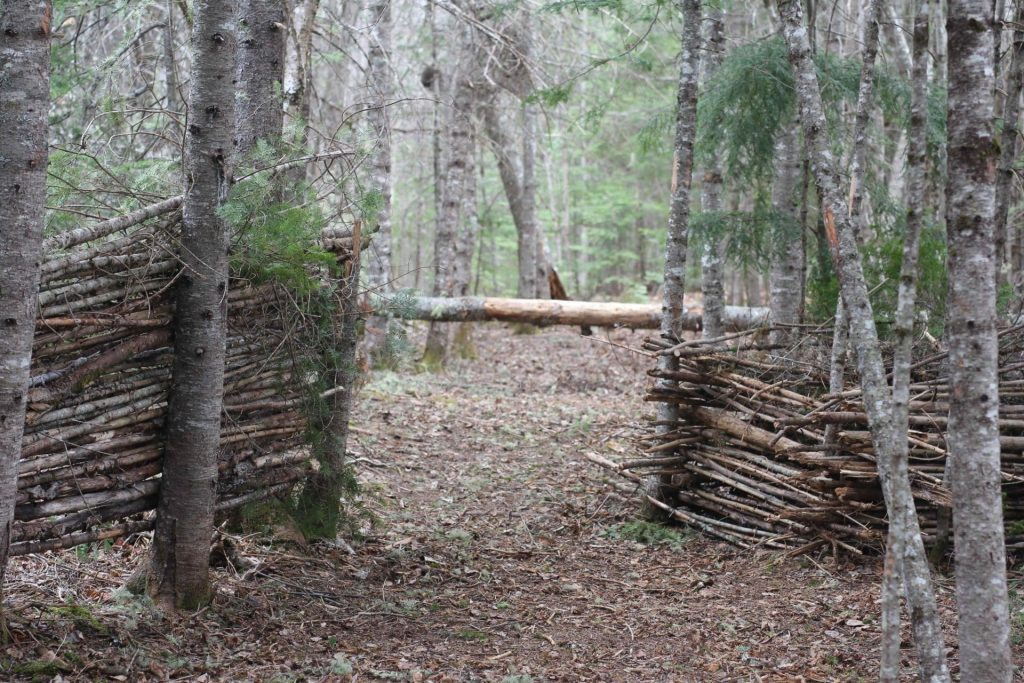 Life on the Homestead: The trails on our property
