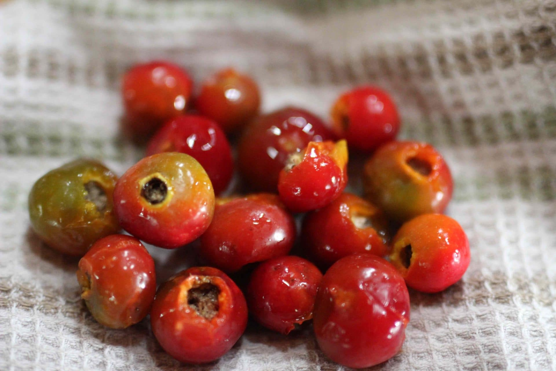 How to Harvest, Dry & Store Rose Hips