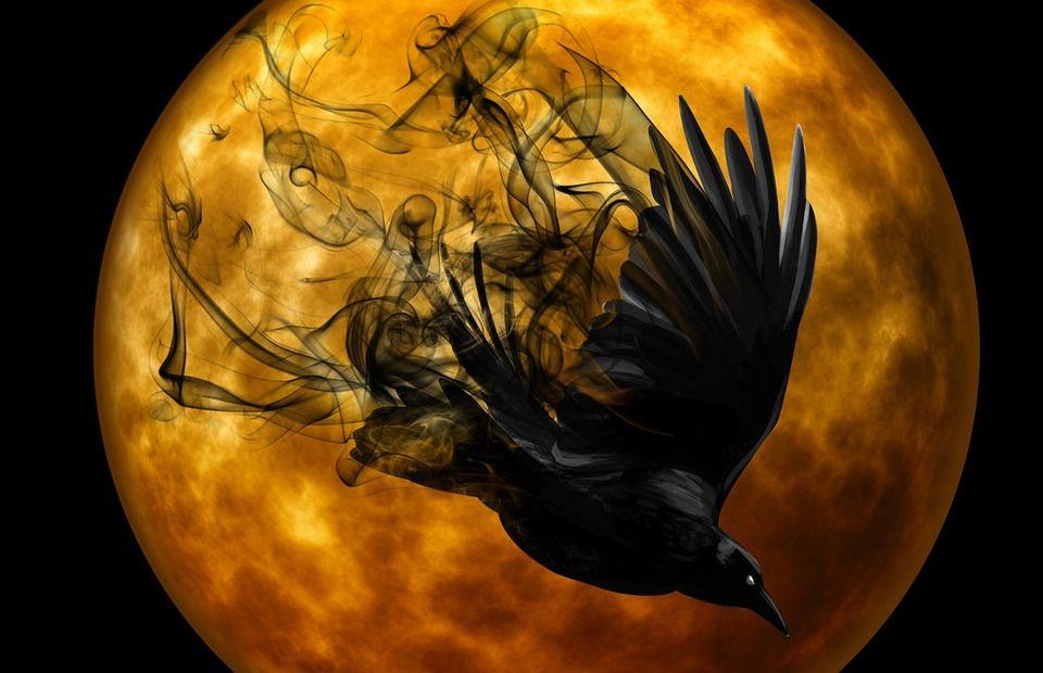 The Allure of Ravens: Lore, Mythology and Symbolism