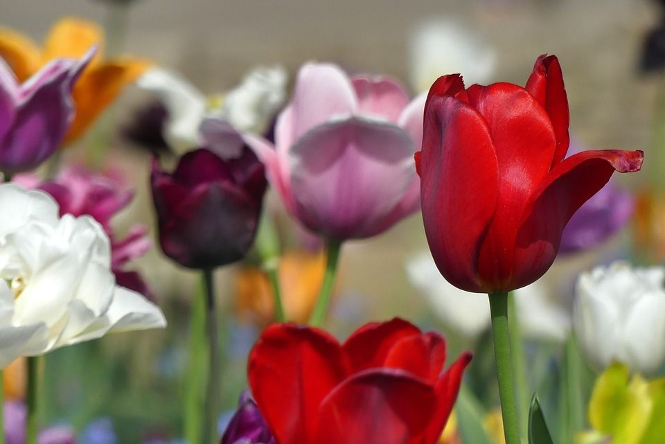 Six Ornamental Spring Plants & Flowers That You Can Eat!